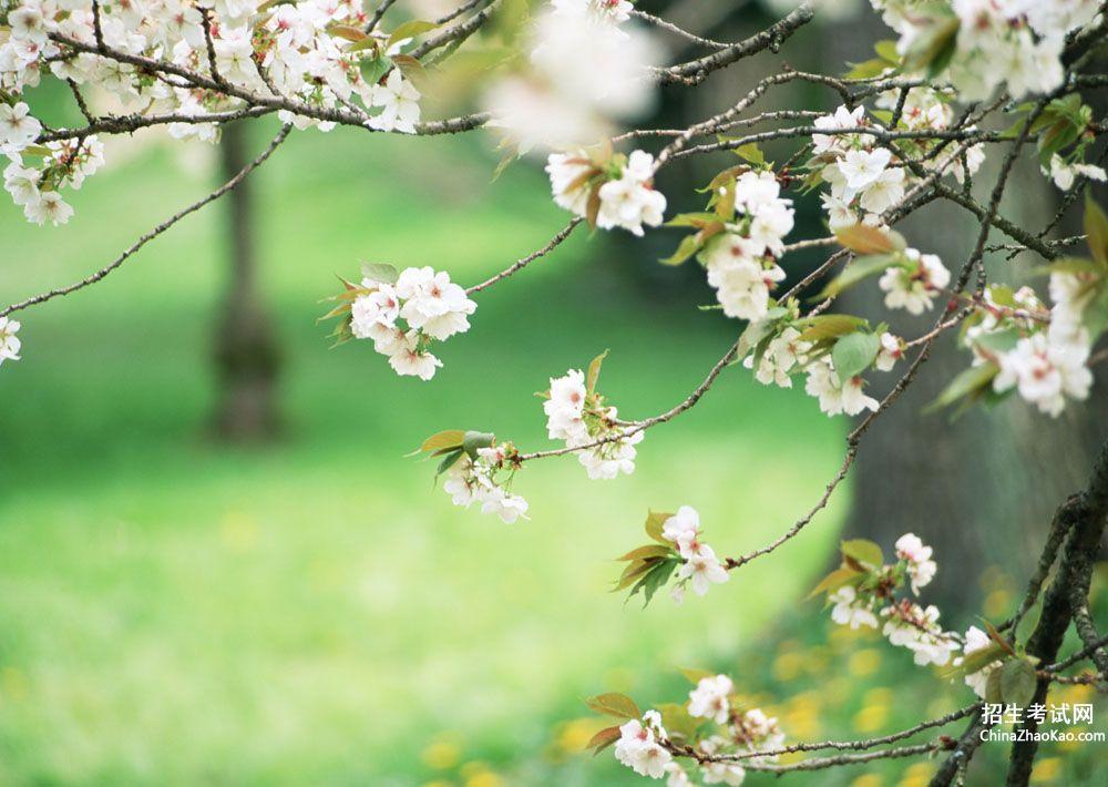 关于桃花的优美段落