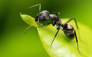 【我是一只蚂蚁】