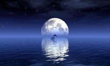 月光下的遐想作文_月光下的遐想_600字