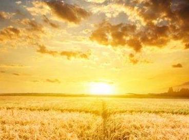 【阳光灿烂的日子作文600】阳光灿烂的日子作文精选