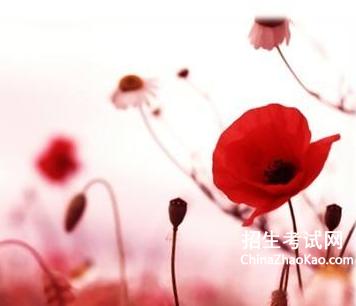 為他人開一朵花閱讀答案_為他人開一朵花