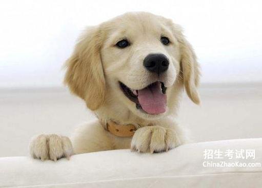 狗狗睡觉突然哼哼唧唧|狗狗哼哼唧唧是撒娇吗