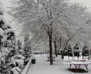 【描写雪的诗句大全】描写雪的文章大全