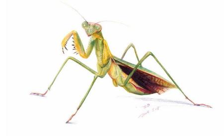 【描写昆虫的彩票200字】描写昆虫的彩票