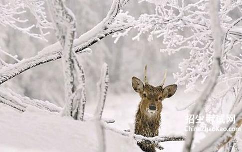 【表达下雪的classic的说说】表达下雪的classic的说说