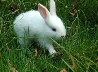 [可爱的小白兔作文300字]作文可爱的小白兔