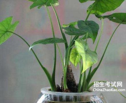 [植物借物喻人作文大全]关于植物的作文大全