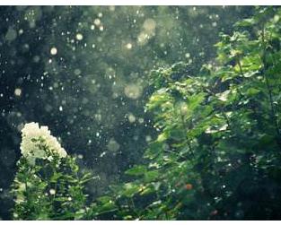 山雨课文教案|山雨教案范文