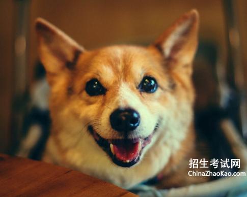 [小狗生活特点作文大全]可爱的小狗作文大全