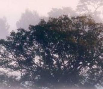 [关于雾的作文300字]关于雾的作文
