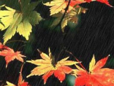 [秋雨的作文300字]秋雨的作文大全