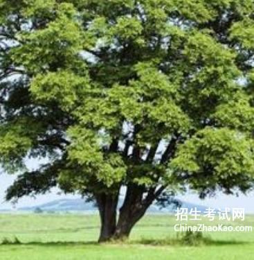 有关树的文章_关于树的文章大全