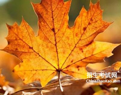 描写秋天的句子和段落_描写秋天的段落大全