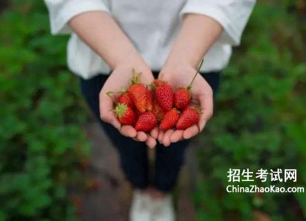 摘草莓作文平凡的一天,摘草莓作文精选