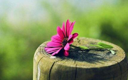 【植物的彩票300字】植物的彩票