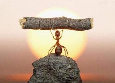 [蚂蚁的启示作文400字]蚂蚁的启示作文精选