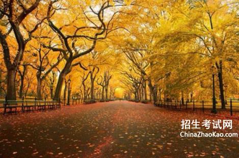 【秋天的落叶作文450字】秋天的落叶作文精选