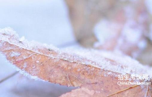 关于霜降水痕收
